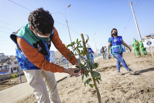 Municipalidad  de Lima  realiza plantado de 200 árboles en  Villa el Salvador