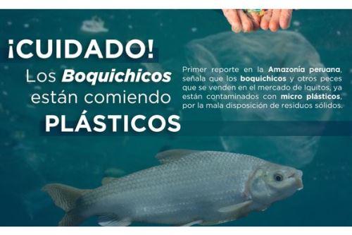 El Instituto de Investigaciones de la Amazonía Peruana desarrolló estudio pionero. Foto: ANDINA/Difusión