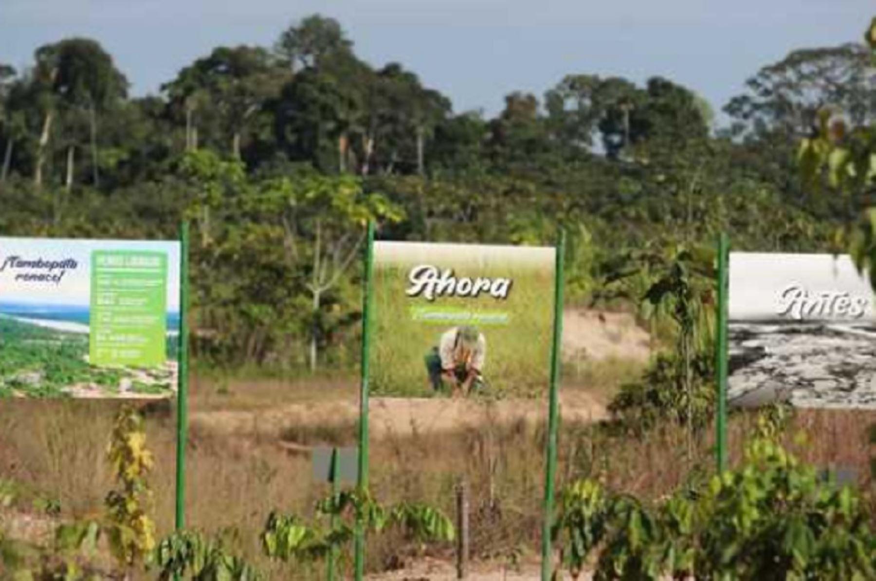 Alrededor de 750,000 plantas de especies nativas del país se han producido en los viveros del Instituto de Investigaciones de la Amazonía Peruana (IIAP) y fueron sembrados al interior de la Reserva Nacional Tambopata en la región Madre de Dios, culminando así el proceso de recuperación de las áreas degradadas por la minería ilegal en esa zona del país.