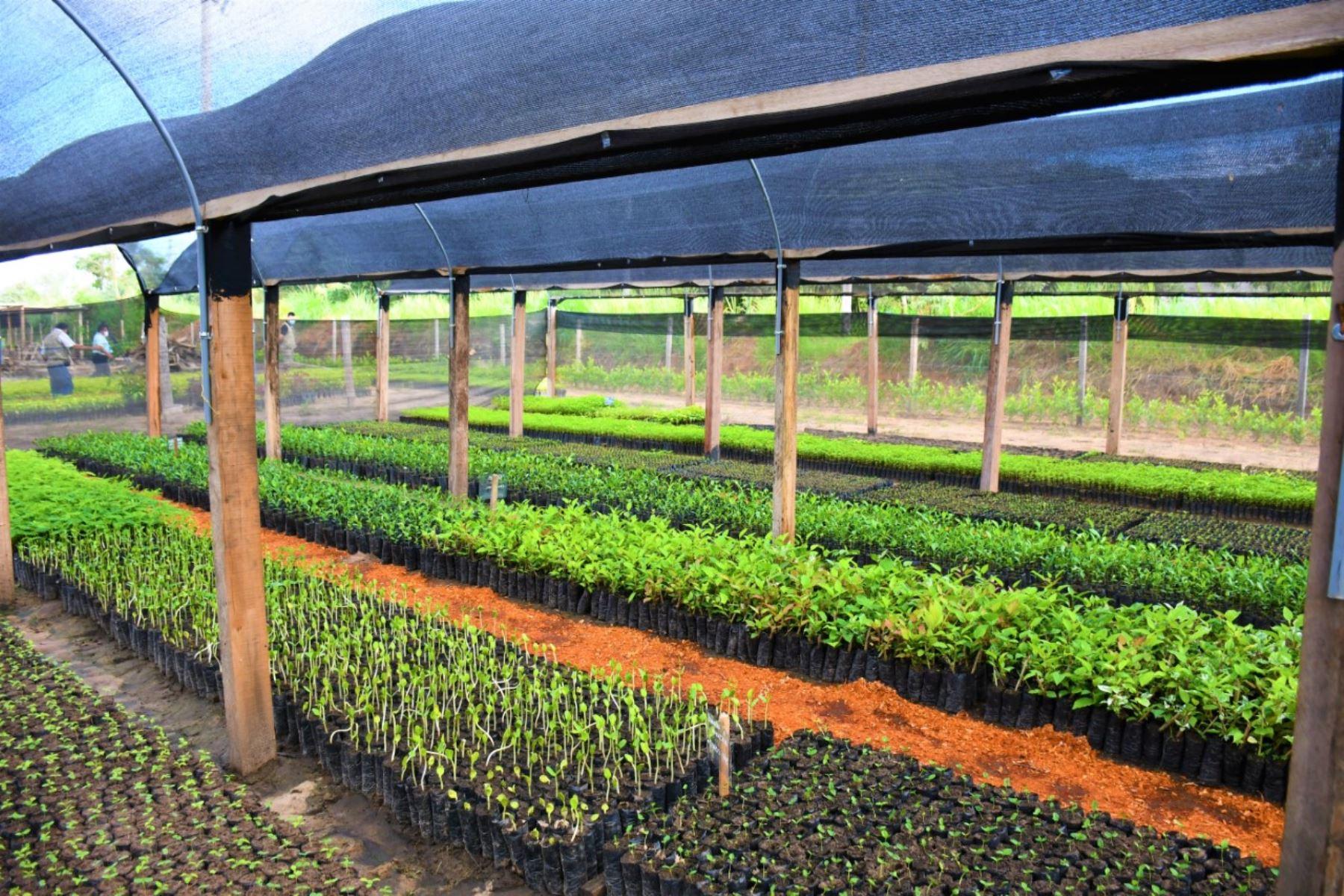 San Martin: implementan módulo de biofertilizantes para reducir consumo de agroquímicos