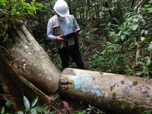 Osinfor instaló equipo multisectorial que realizará estudio sobre la tala y comercio ilegal de la madera en Perú. Foto: ANDINA/difusión.