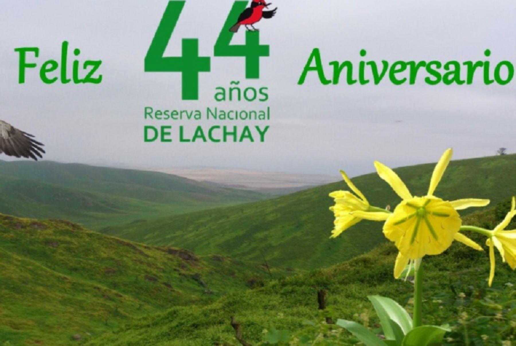 La Reserva Nacional de Lachay es un pequeño paraíso ubicado a tan solo 105 kilómetros al norte de la ciudad de Lima, en el distrito de Chancay, provincia de Huaura, y cumple 44 años como área natural protegida que conserva la singular biodiversidad de las lomas costeras. Foto: Facebook/Reserva Nacional de Lachay-Sernanp
