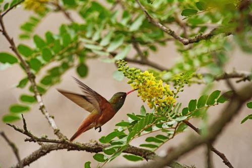 Disfruta la belleza natural de la Reserva Nacional de Lachay