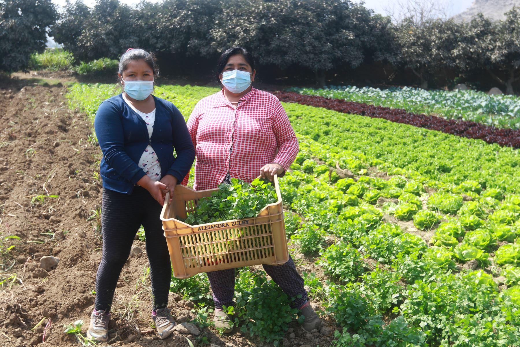 Agricultores. ANDINA/Jhonel Rodríguez Robles