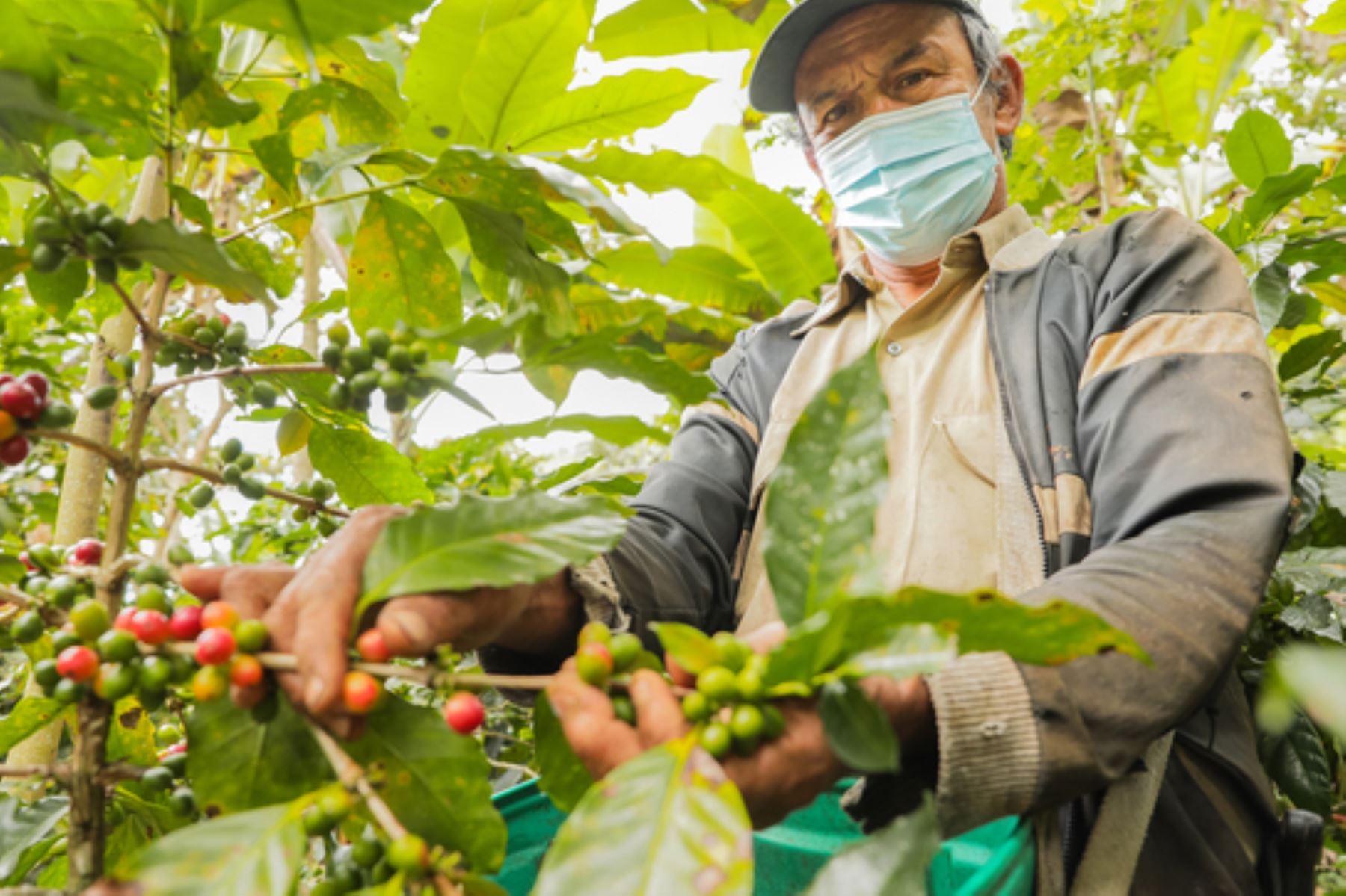 Cajamarca: Ruta del Café ofrece nuevas alternativas de turismo vivencial
