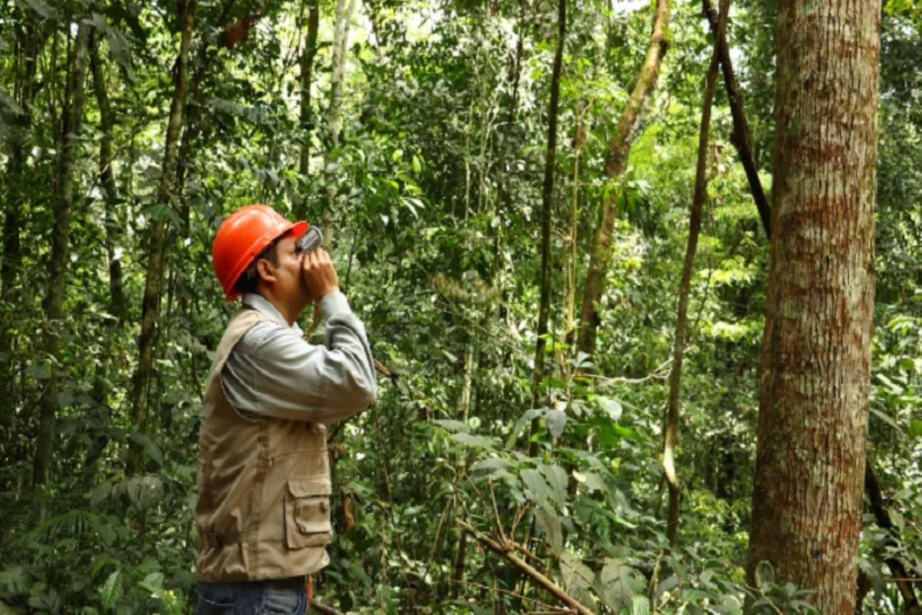Una de las herramientas diseñadas por el Osinfor para impulsar la competitividad forestal es el uso de un aplicativo para  el reconocimiento de especies forestales, que servirá de apoyo para el titular y regente de títulos habilitantes al momento de realizar el censo forestal.