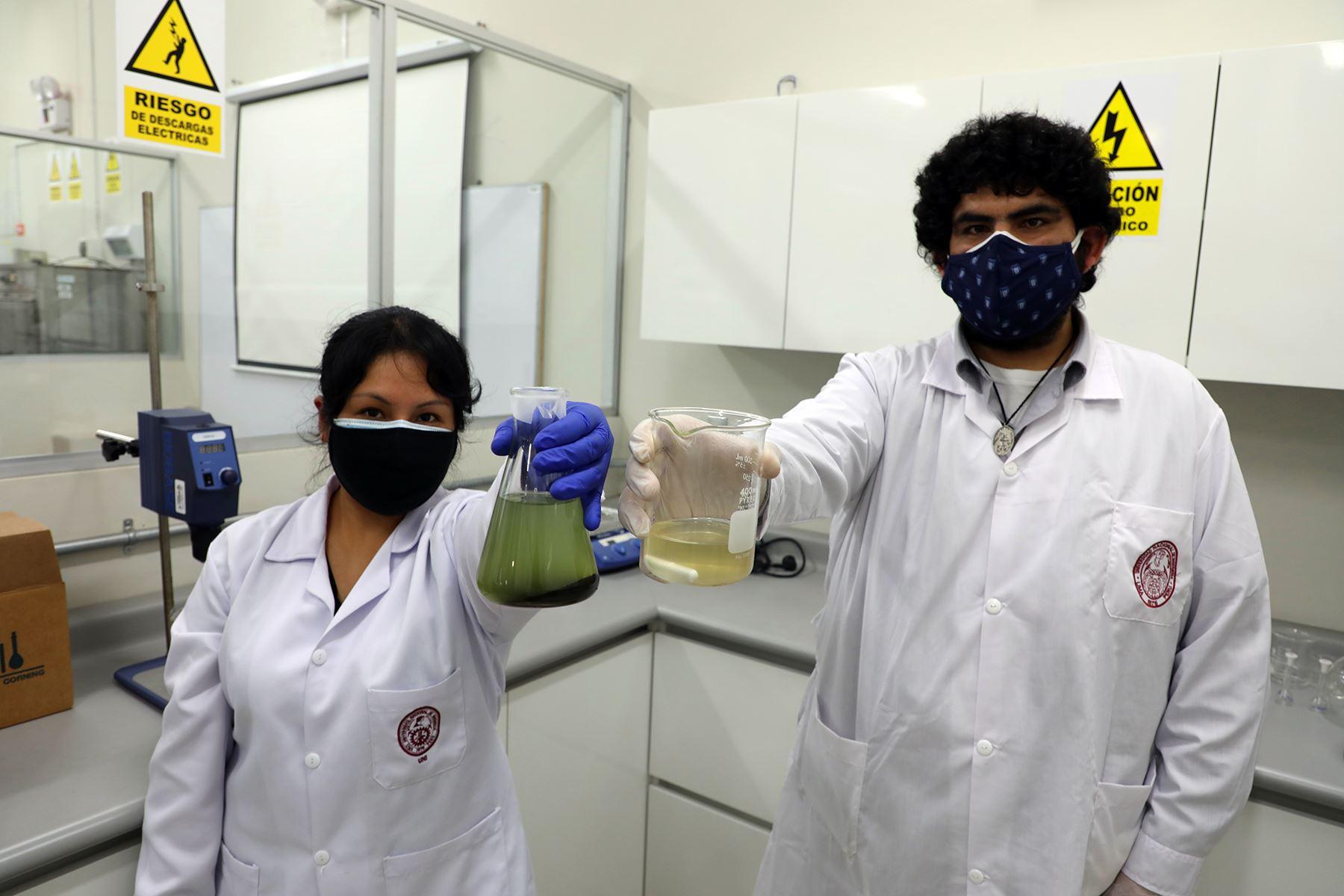 Las macroalgas representan un recurso potencialmente empleado para la producción de materiales con alto valor agregado. Foto: Concytec