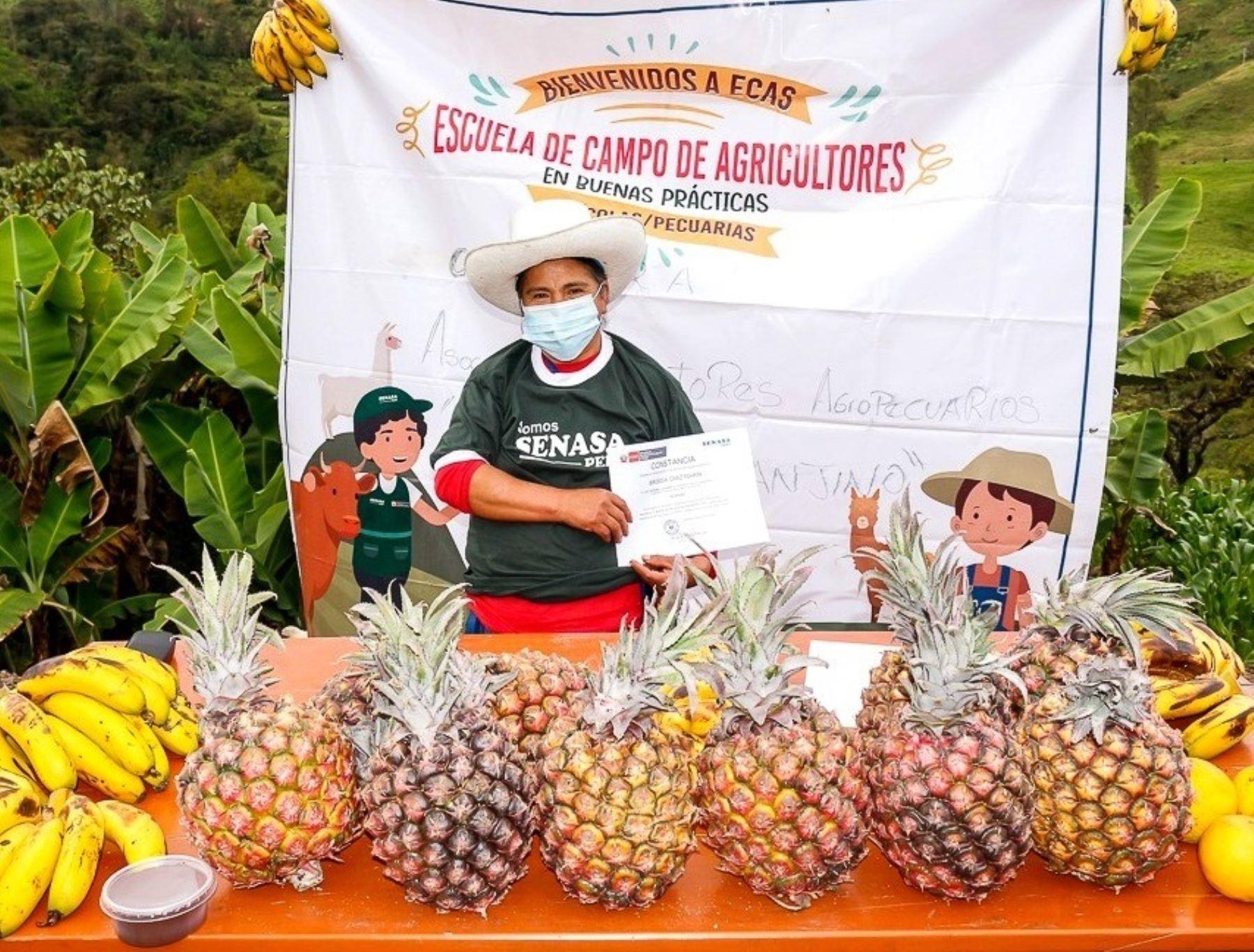 Senasa capacita a productores de Cajamarca en buenas prácticas agrícolas y pecuarias. ANDINA/Difusión