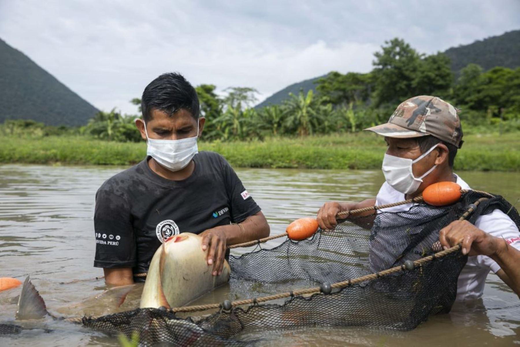 Vraem: familias asháninkas y nomatsigengas mejoran producción acuícola