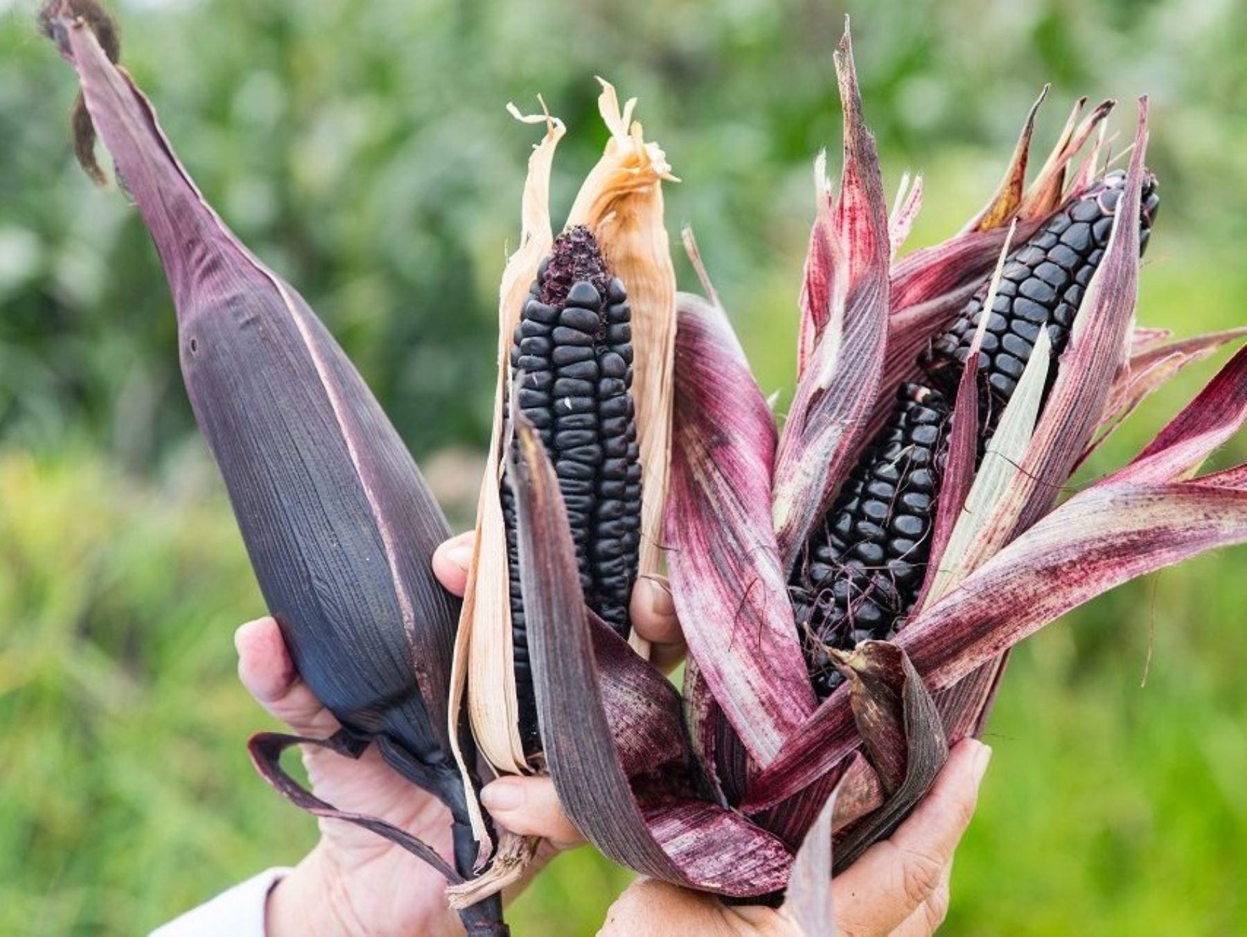 Resaltan aporte del INIA en impulso de la agricultura con cultivos de alto valor genético