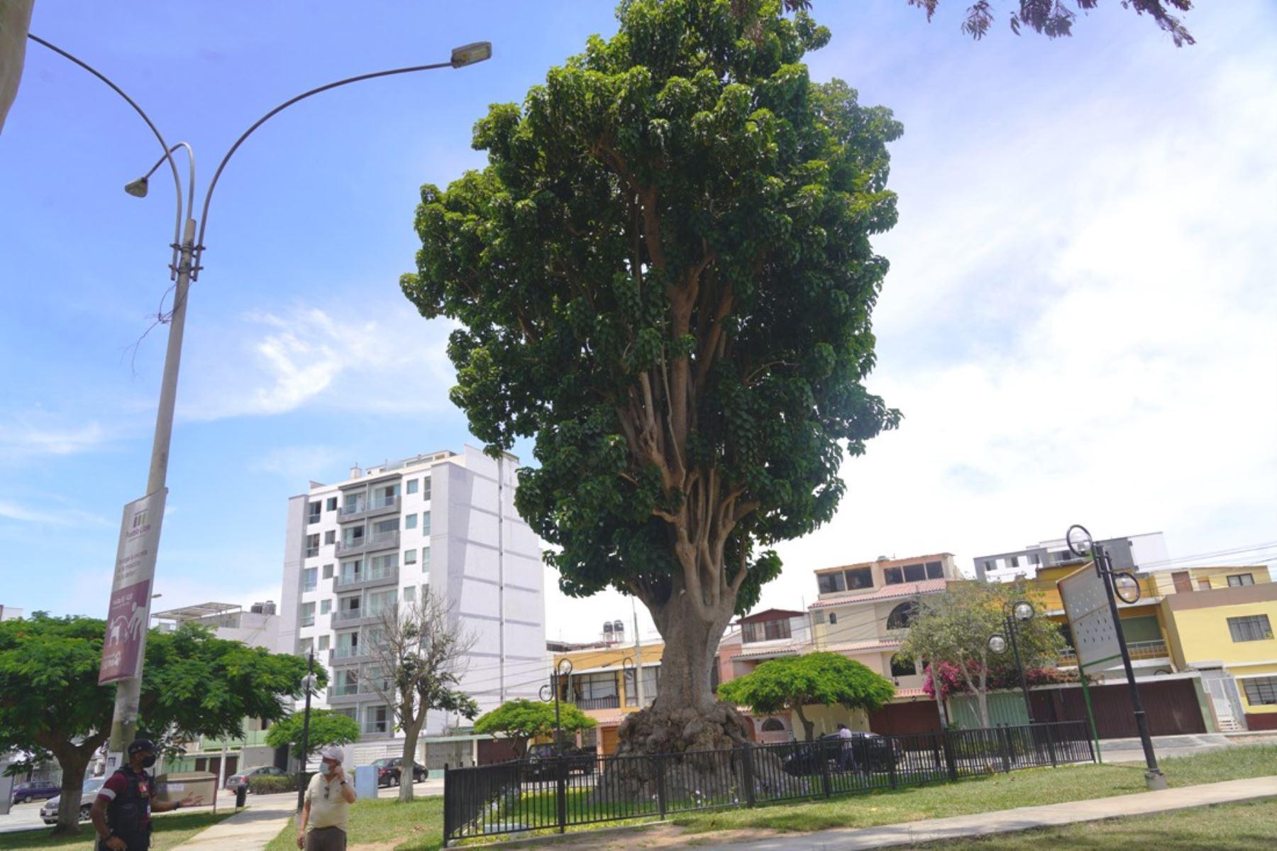 Bicentenario: Pueblo Libre revalora parque donde el libertador San Martín plantó un árbol
