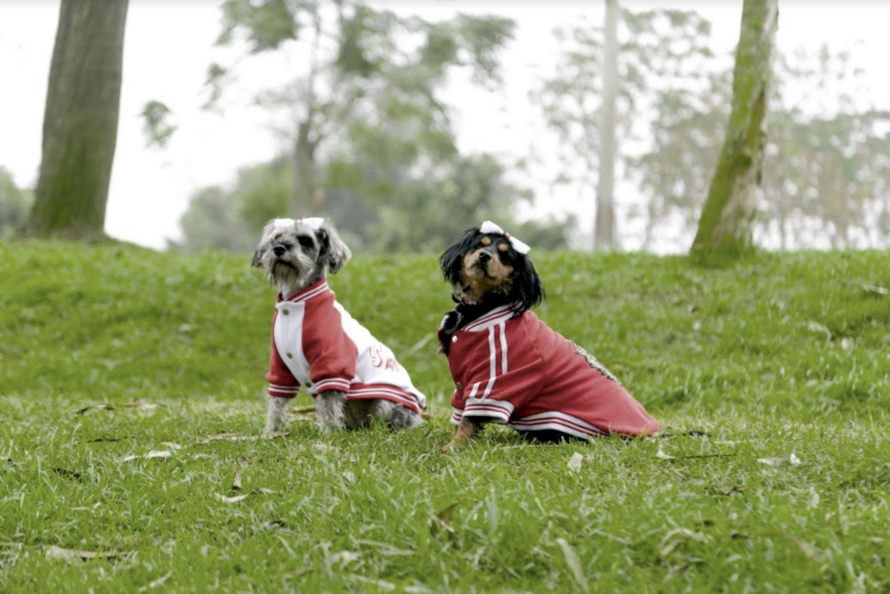 ¿Tienes mascota? Clubes zonales organizan concurso canino de disfraces