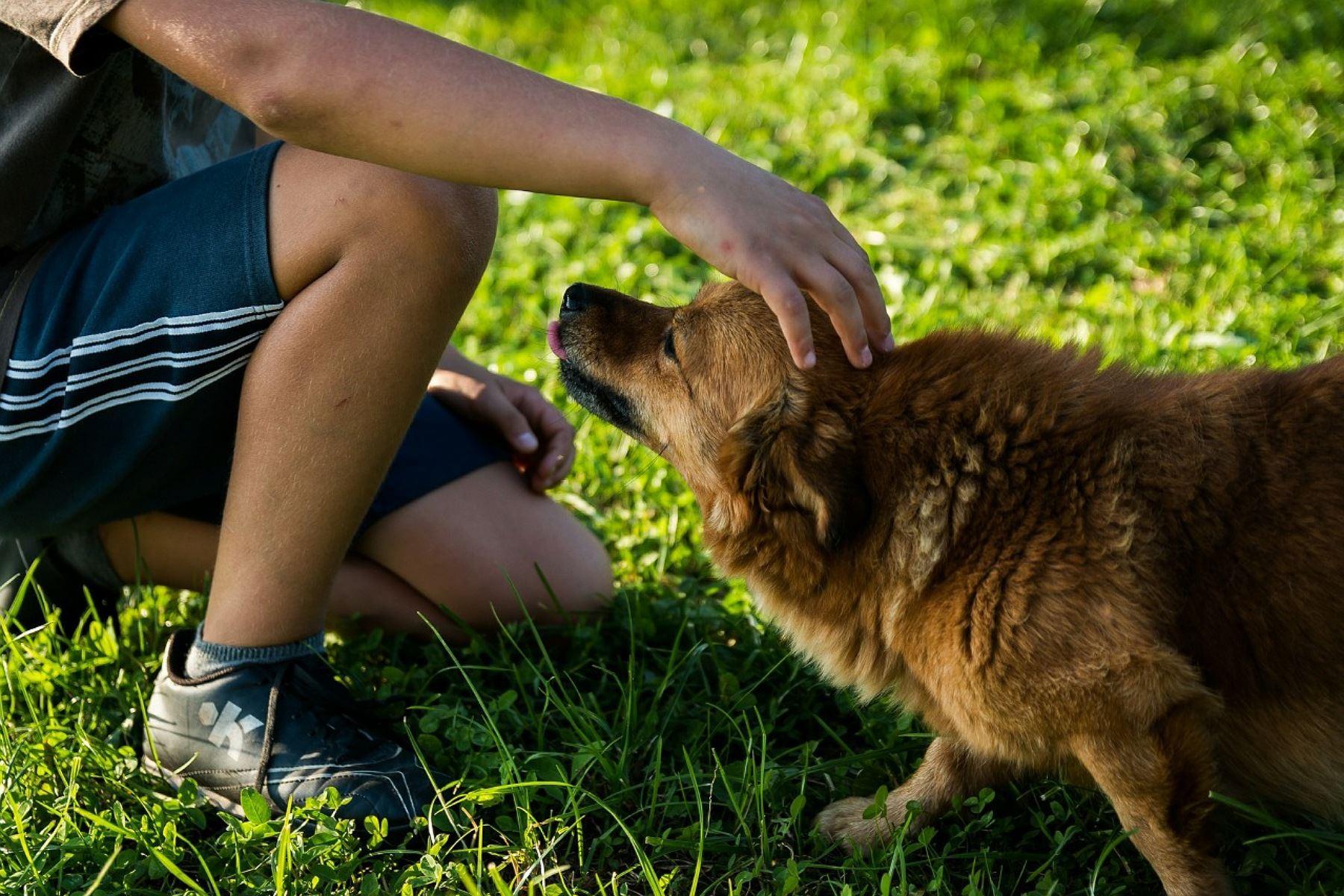 """Albergues de perros y gatos lanzan rifa solidaria \""""Patitas al Bicentenario\"""""""