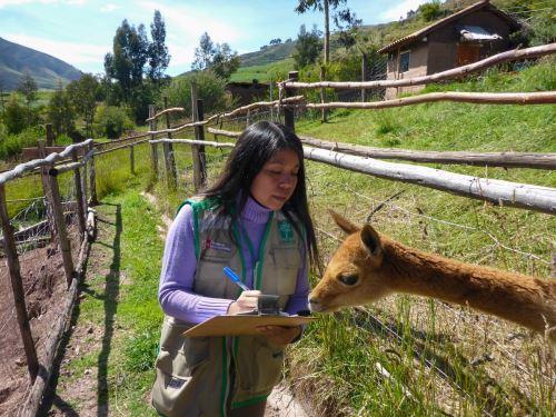 Osinfor implementó el programa SMART, una herramienta de monitoreo espacial que fortalecerá la supervisión en los centros de cría de fauna silvestre. ANDINA/Difusión
