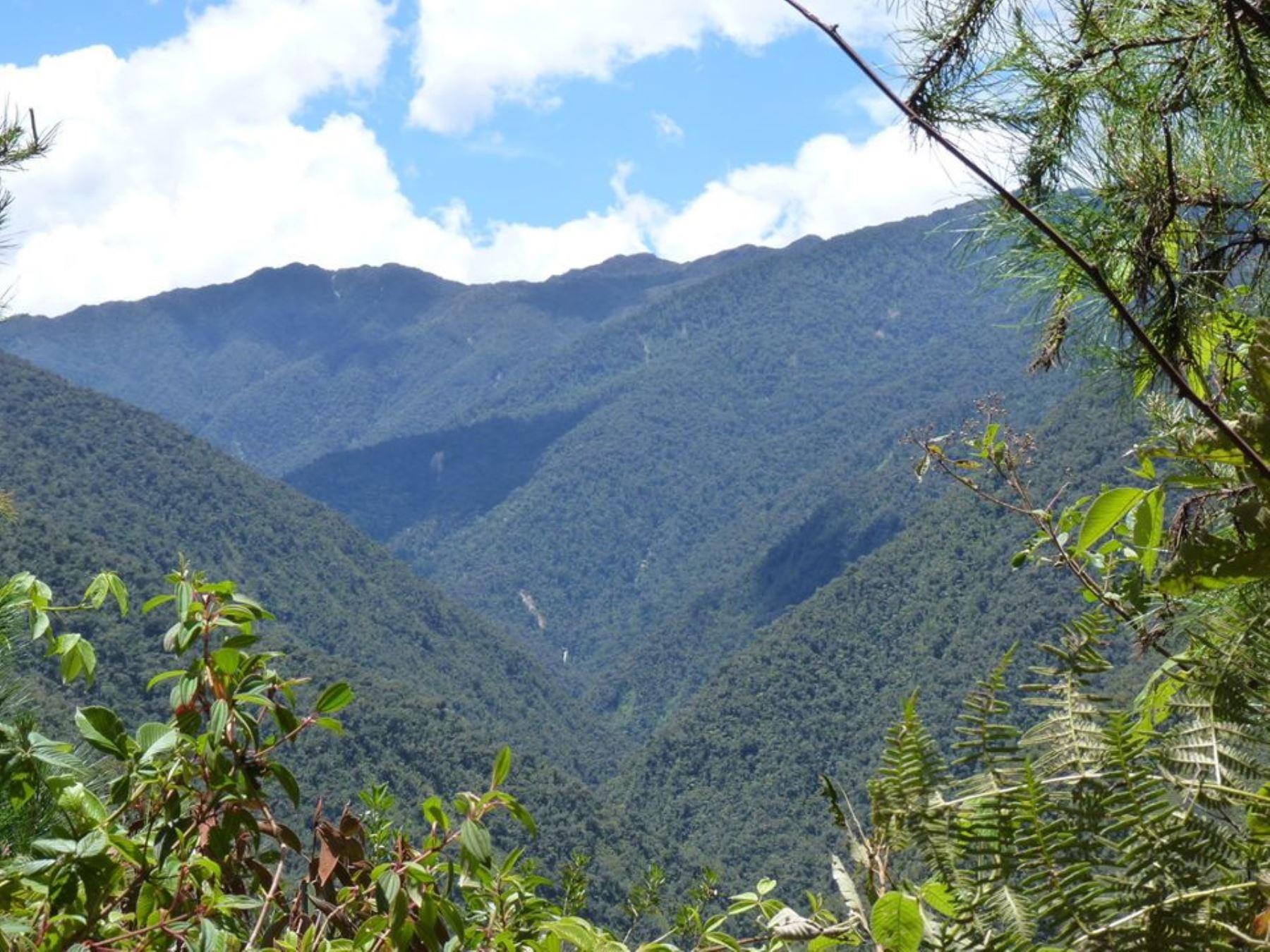 Oxapampa: piden se acelere trámites reconocer creación de reserva Chontabamba-Huancabamba