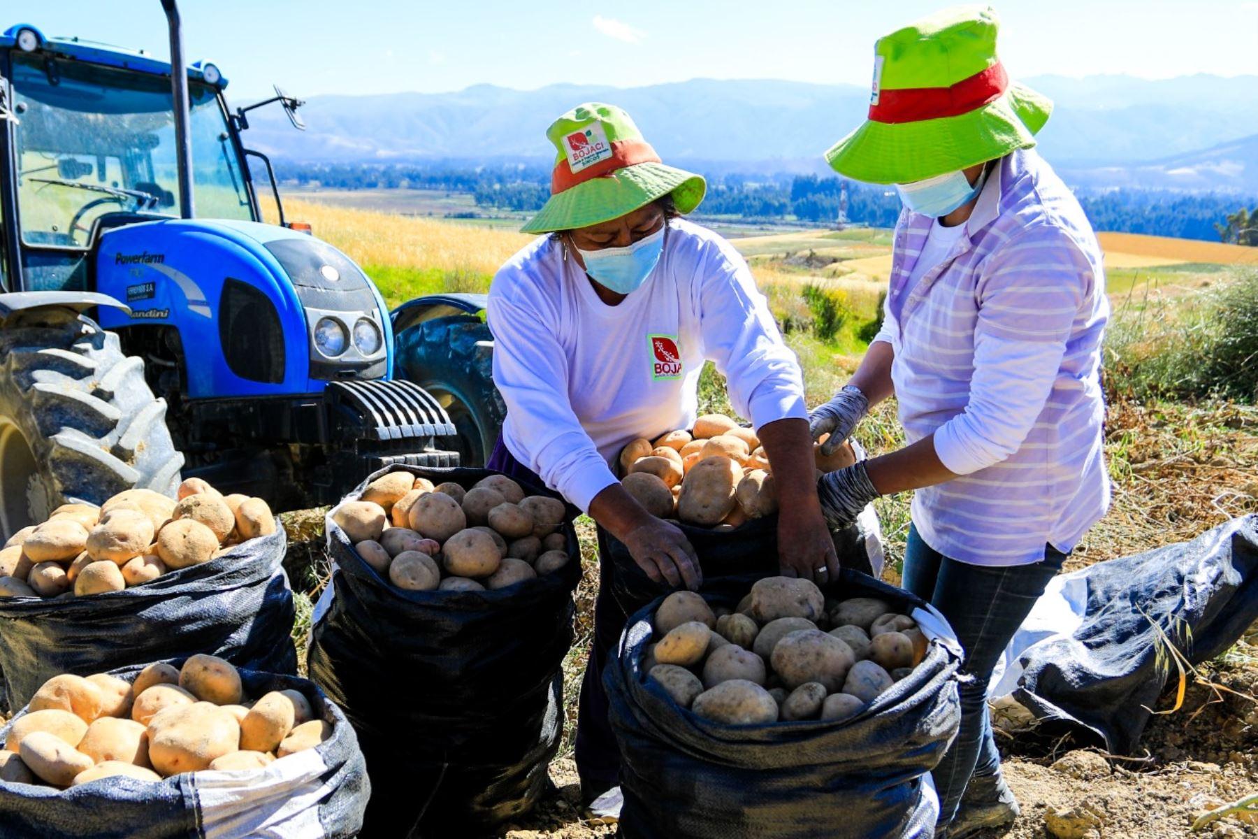 Nueva política agraria impulsará mercados y mayor rentabilidad de agro familiar