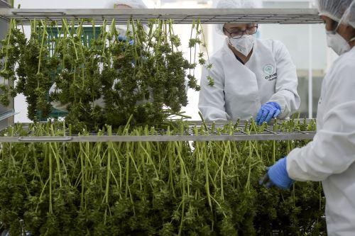 """""""Ya no estamos solamente en uso farmacéutico. Estamos abriendo el espacio para hacer mucho más en cosmética (…) alimentos y bebidas"""" o textiles, enfatizó el presidente de Colombia, Iván Duque. Foto: AFP"""