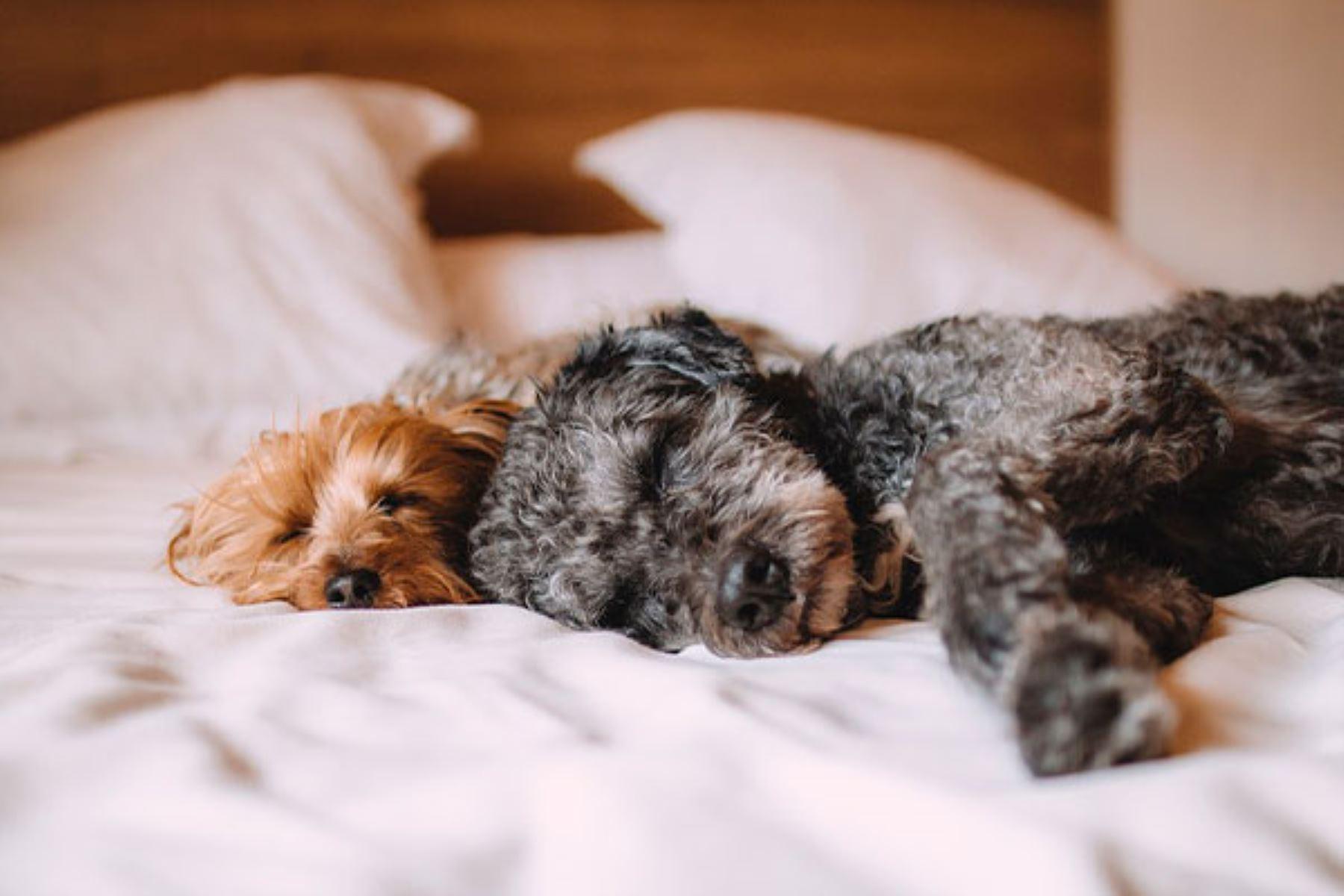 Esta semana se celebró el Día Mundial del Perro, conoce las recomendaciones de un epidemiólogo para lograr una convivencia saludable.