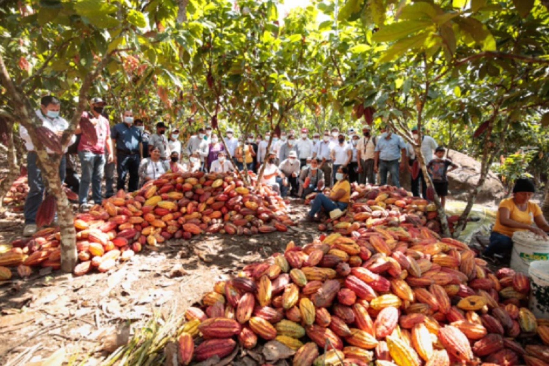 La Gerencia de Desarrollo Económico del Goresam organizó la actividad que comprendió visitas a las provincias de San Martín, Moyobamba y Huallaga, donde intercambiaron experiencias en la producción y comercialización del cacao y adquirieron conocimientos sobre el uso de tecnologías y experiencias en el manejo de ese cultivo.