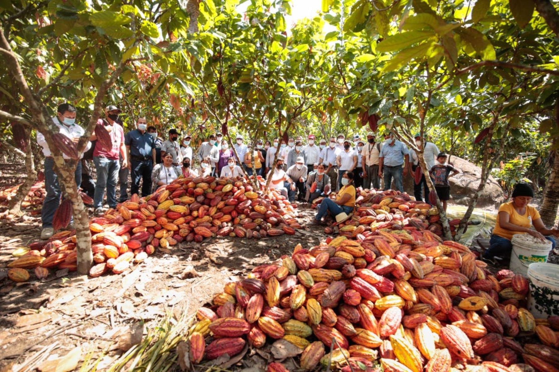San Martín: agricultores de Madre de Dios replicáran cultivos de cacao y naranja