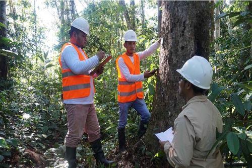 Partida presupuestal podrá ser utilizada para actividades orientadas a fortalecer la competitividad y el aprovechamiento sostenible de los recursos forestales y fauna silvestre.