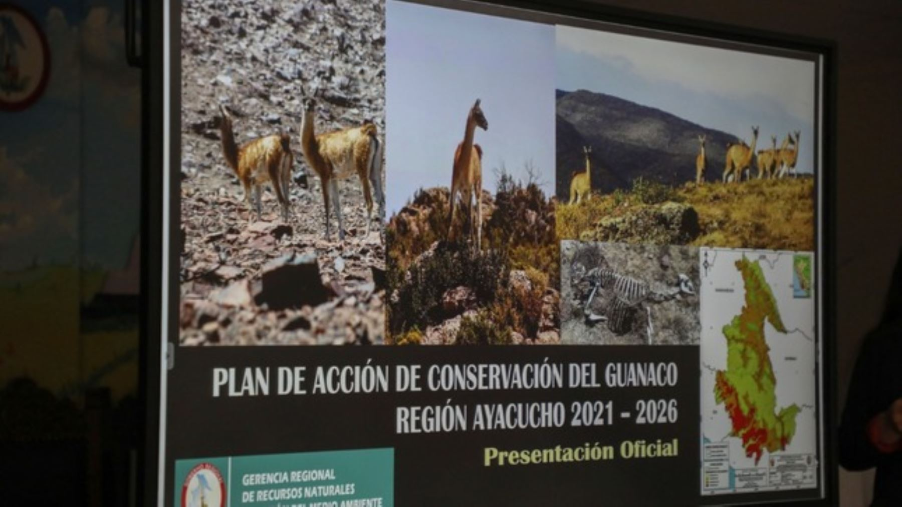 Ayacucho: socializan Plan de Acción de Conservación del Guanaco 2021-2026