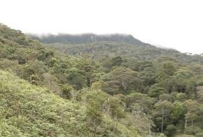 Bosques de Marona es la primera concesión de conservación forestal otorgada a una ronda campesina en la región San Martín. Después de cuatro años de indesmayable trabajo de sus integrantes logró recuperar 70 hectáreas degradadas de bosque con el apoyo del Serfor y del Gobierno Regional.