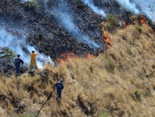 Brigadas reinician labores de extinción de incendios forestales en tres distritos de Cusco. ANDINA/Difusión