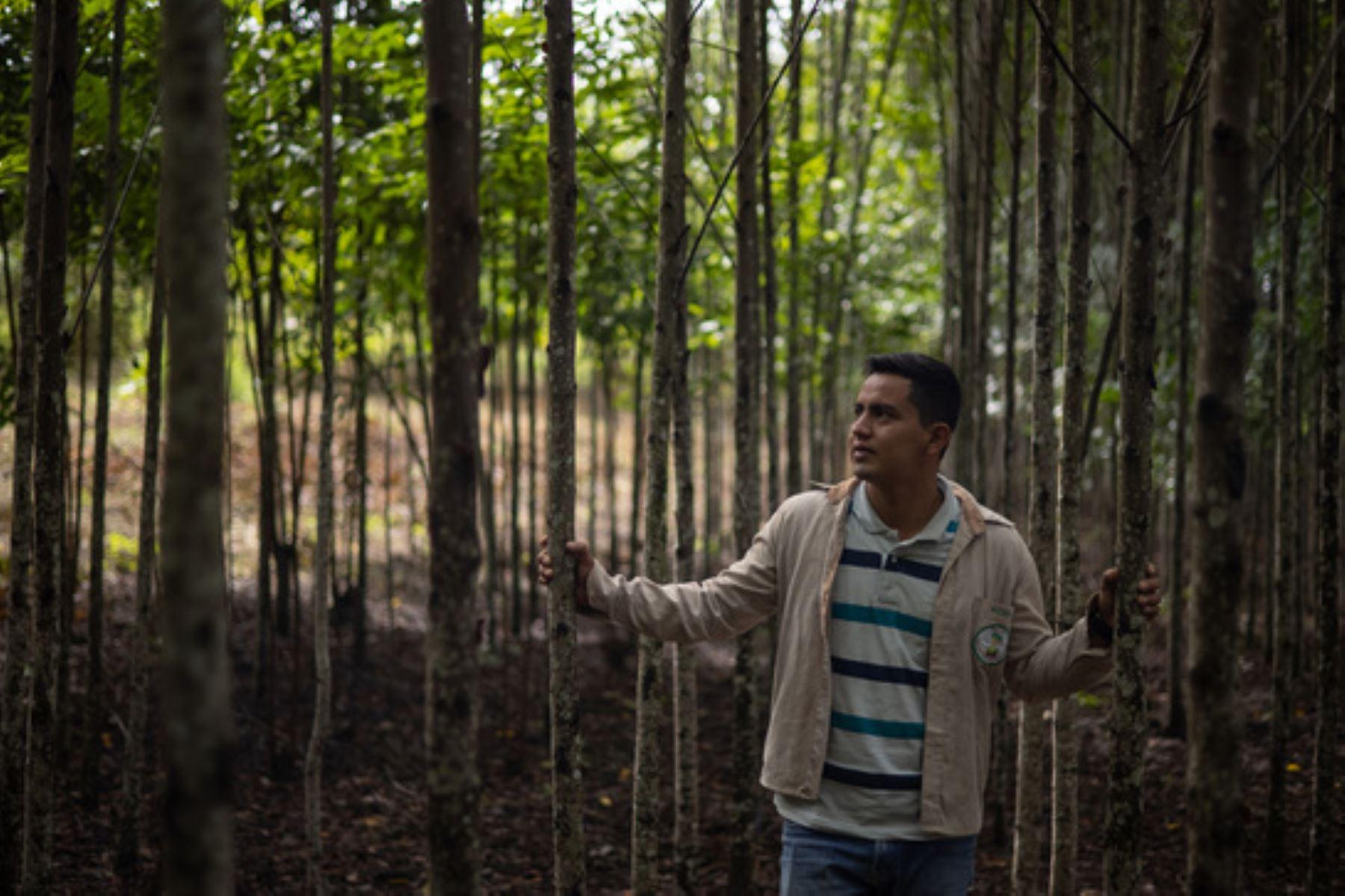 El Proyecto Forestal permitió el desarrollo de 34 talleres de capacitación en beneficio de agricultores. Foto: ANDINA/Serfor