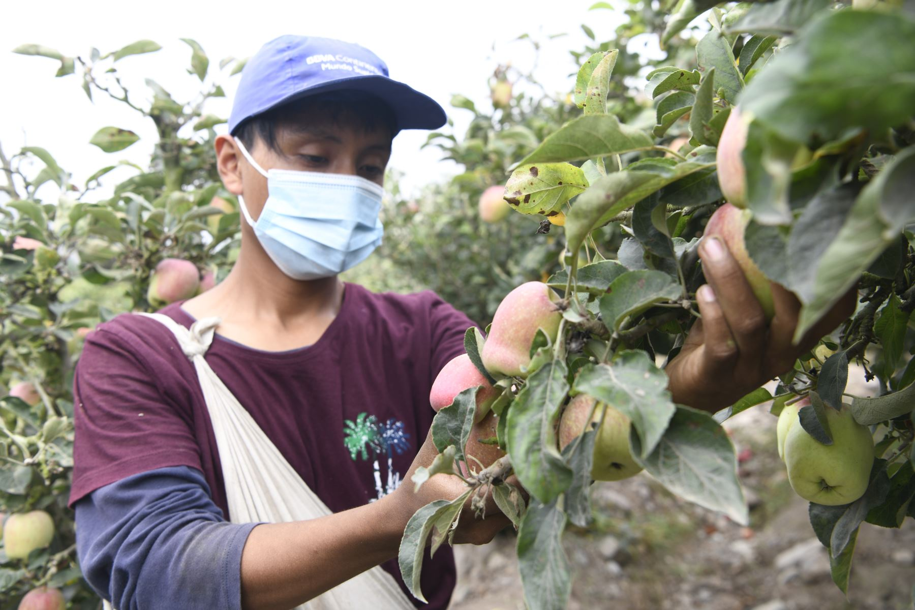 Agroideas y Cofide trabajarán articuladamente en beneficio de agricultores