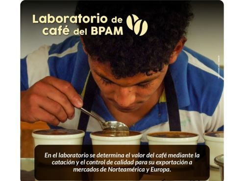 Jóvenes comprometidos con la conservación que viven en el Bosque de Protección Alto Mayo, en San Martín, se capacitan como catadores de café. ANDINA/Difusión