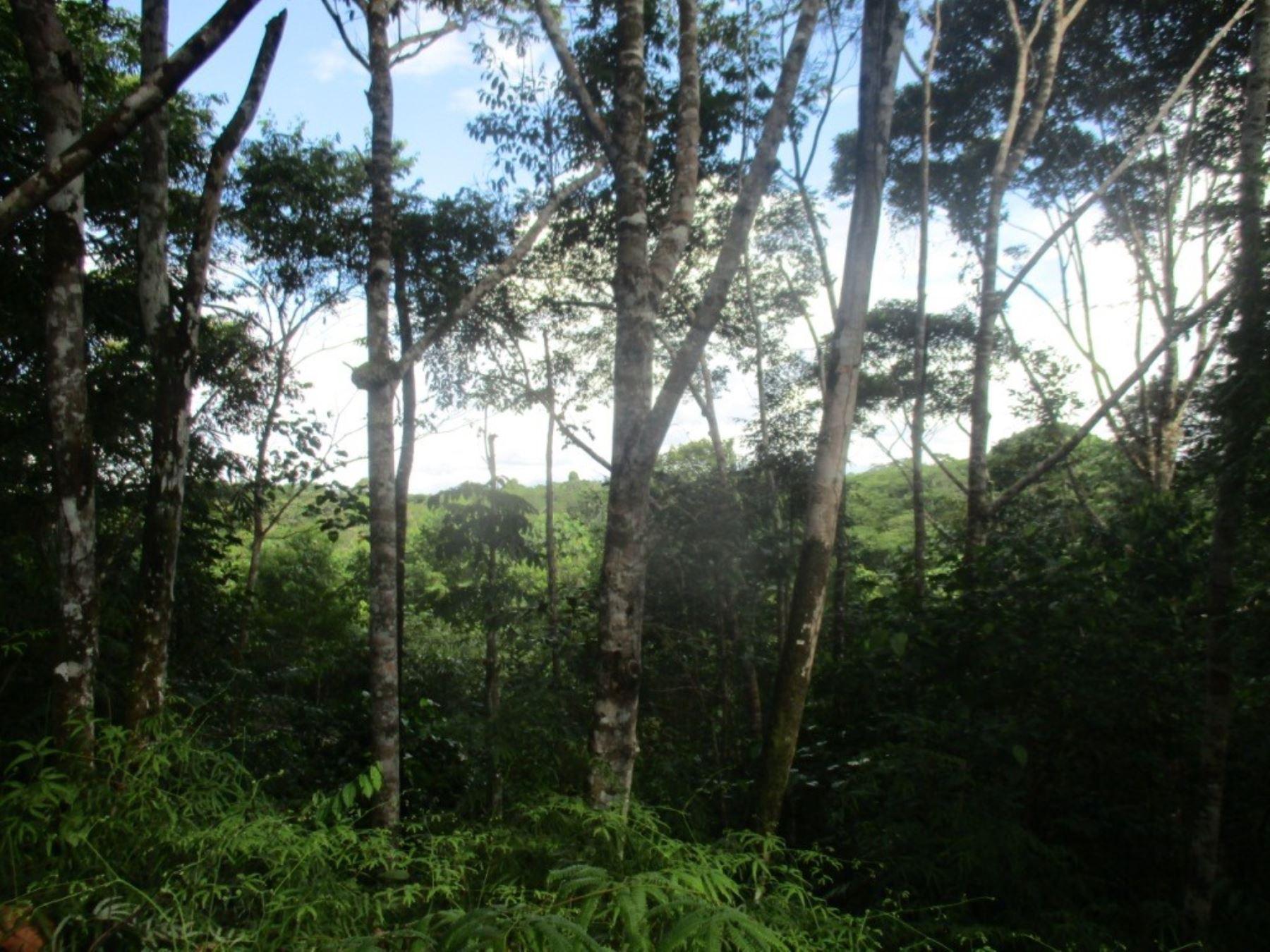El área de conservación privada Ni Meraya se convirtió en la trigésima que se reconoce en Loreto que se convierte en la región líder en la conservación de la biodiversidad del país.