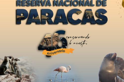La Reserva Nacional de Paracas celebra su 46 aniversario como una de las áreas naturales protegidas que permite apreciar la enorme belleza paisajística y singular biodiversidad que existe en el ámbito marino y costero de la región Ica.
