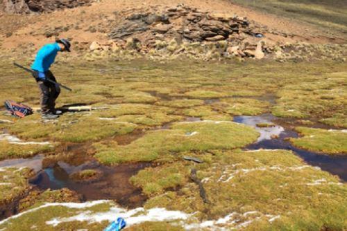 Para las investigaciones se tomaron muestras de sedimentos de este tipo de humedales en la cordillera Vilcanota, en Cusco.