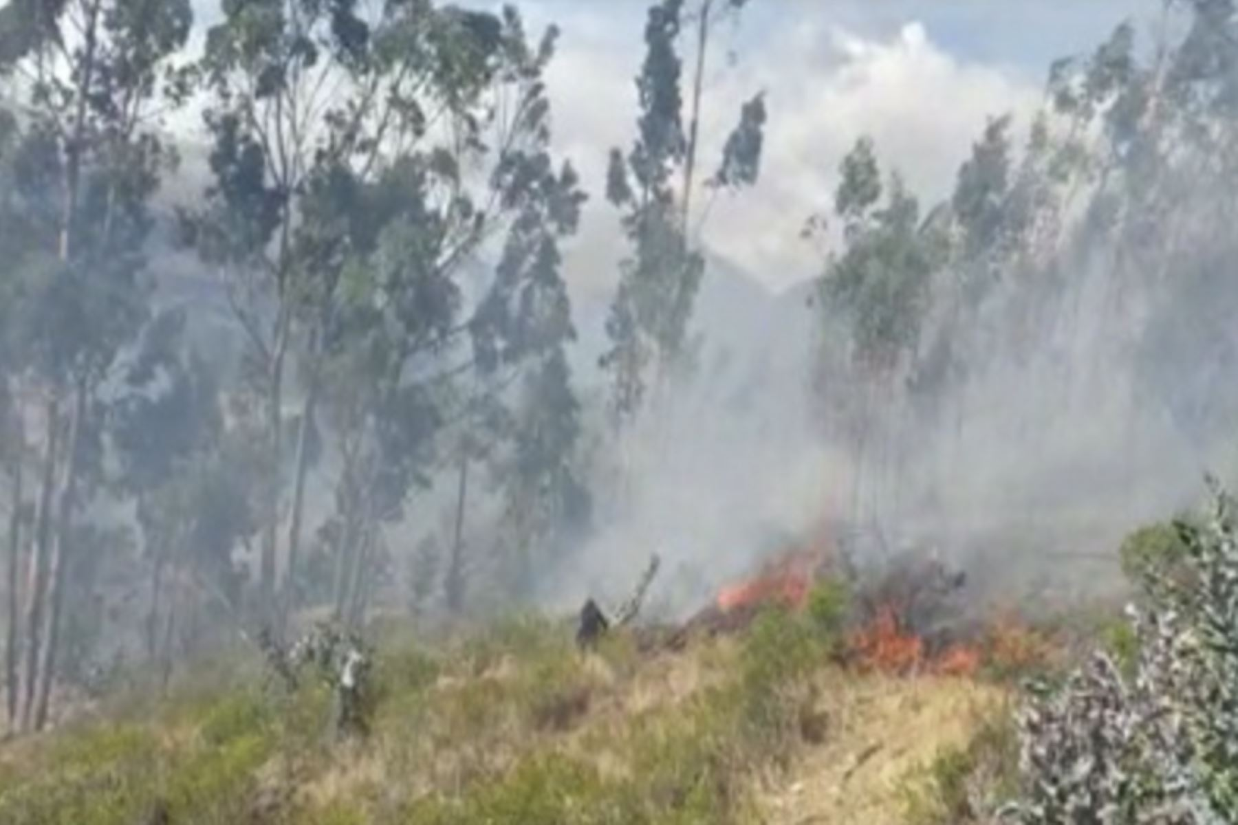 El COER Áncash exhortó a la población a no hacer ningún tipo de quemas porque pueden convertirse en incendios y generan graves daños al ecosistema. Foto: ANDINA/Difusión