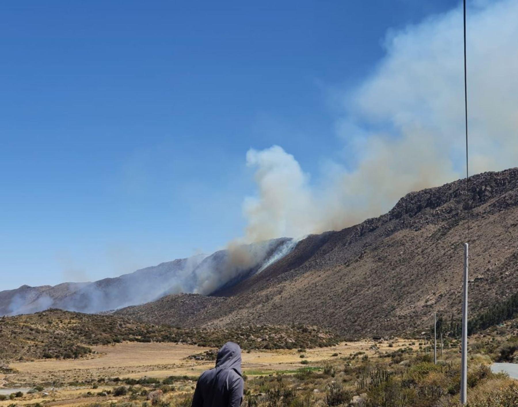 Arequipa: en solo una semana tres incendios forestales arrasaron con 180 ha de pastizales