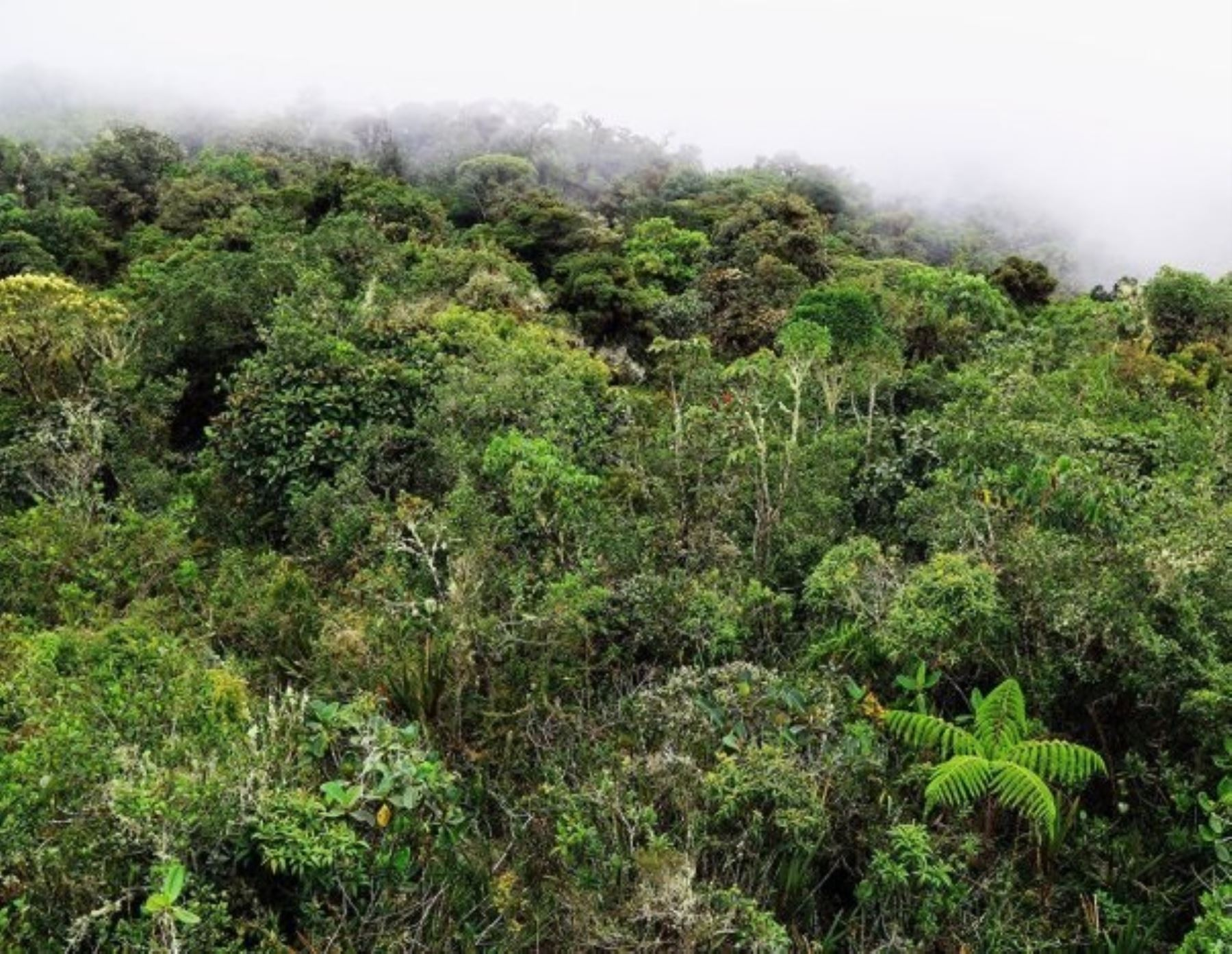 Serfor incorpora a 16 bosques de Pasco en la Lista sectorial de ecosistemas frágiles