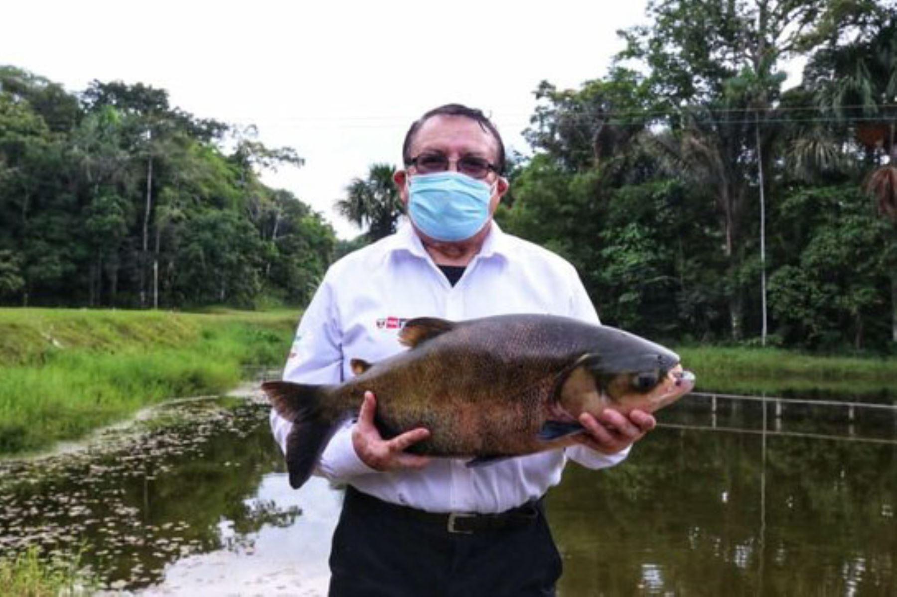 Loreto: conservan especies amazónicas gracias a aplicación de metodologías científicas
