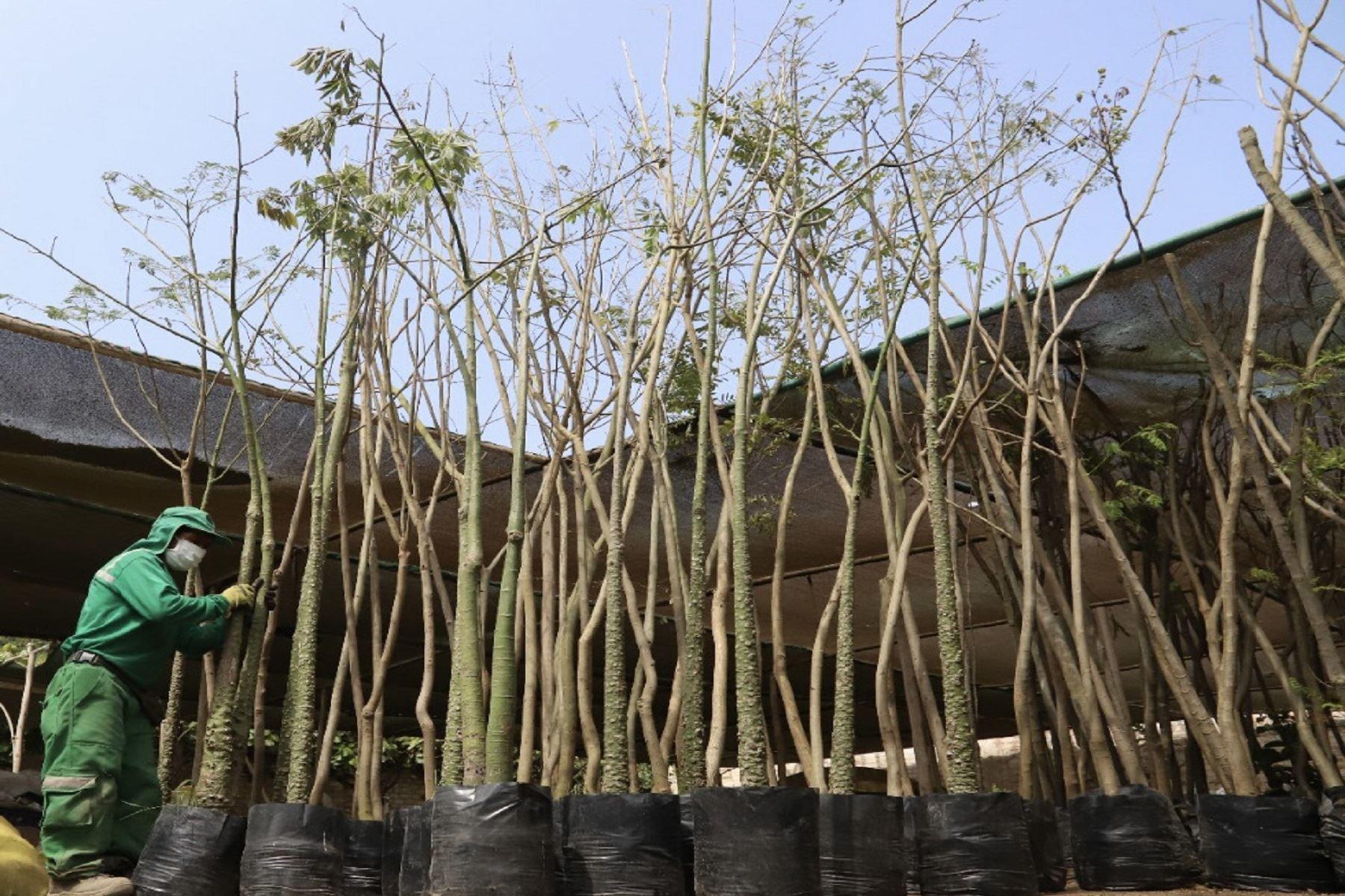 Magdalena: constructoras entregan más de 570 árboles en compensación por talas