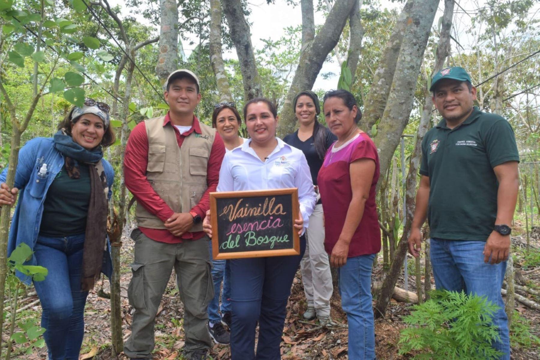 San Martín: manejo de la vainilla nativa se convierte en opción de negocio en Alto Mayo