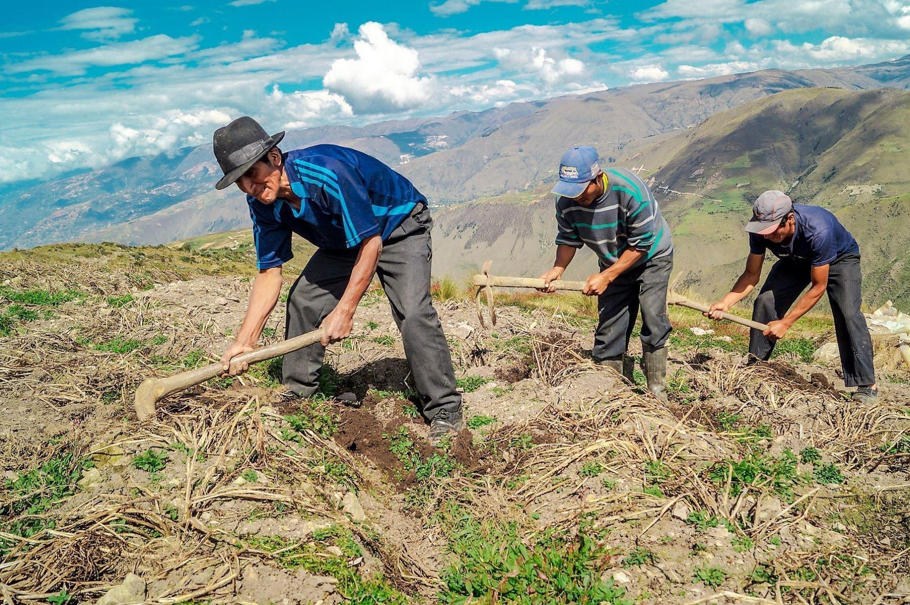 MEF: Bono Yanapay Perú ampliará su cobertura hacia pequeños agricultores