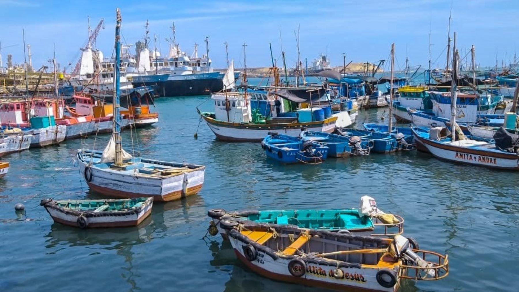 Pesca artesanal: proponen  industrializar la pota para consumo masivo en Ilo