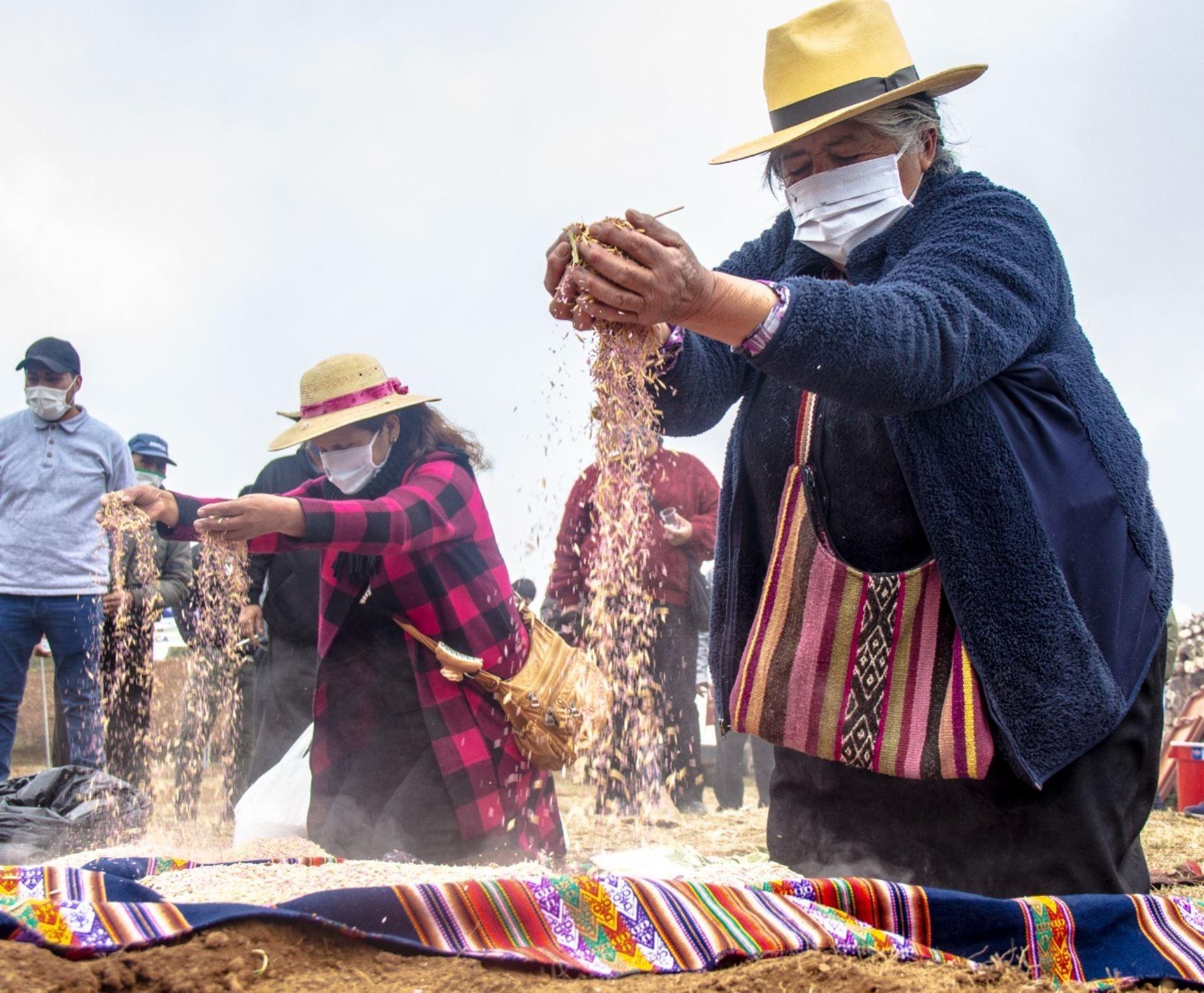 Cusco: Agro Rural lanzó Campaña de Siembra de Pastos y Forrajes 2021-2022