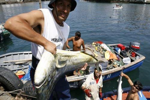 Pesca artesanal. Foto: ANDINA/Difusión