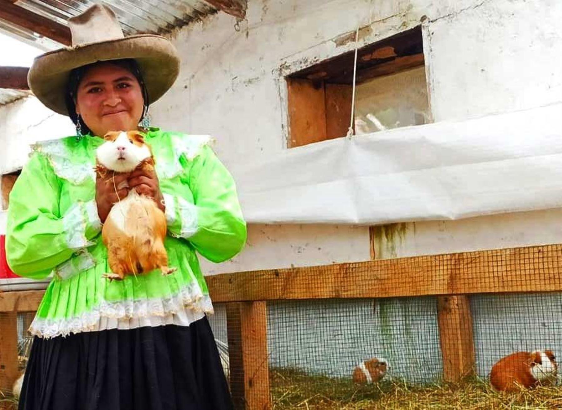 Cajamarca: el cuy es la estrella del festival que promueve emprendimientos de productores