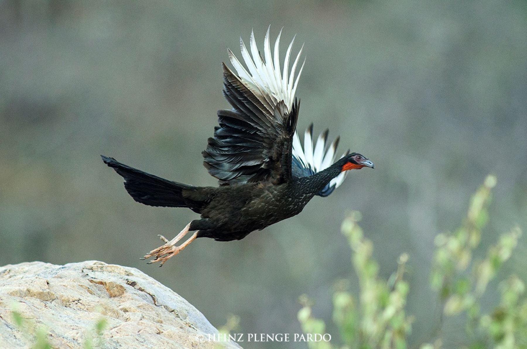 Reserva Ecológica Chaparrí: el destino de moda para los observadores de aves