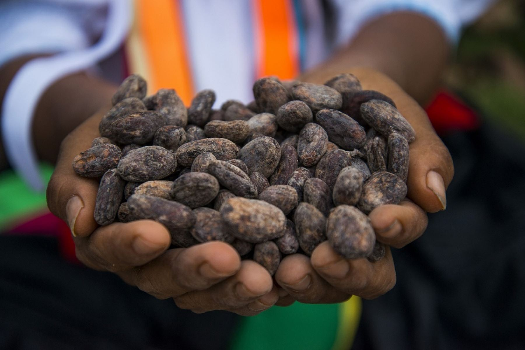 Exportadores de cacao generarían negocios por US$ 7 millones en rueda comercial