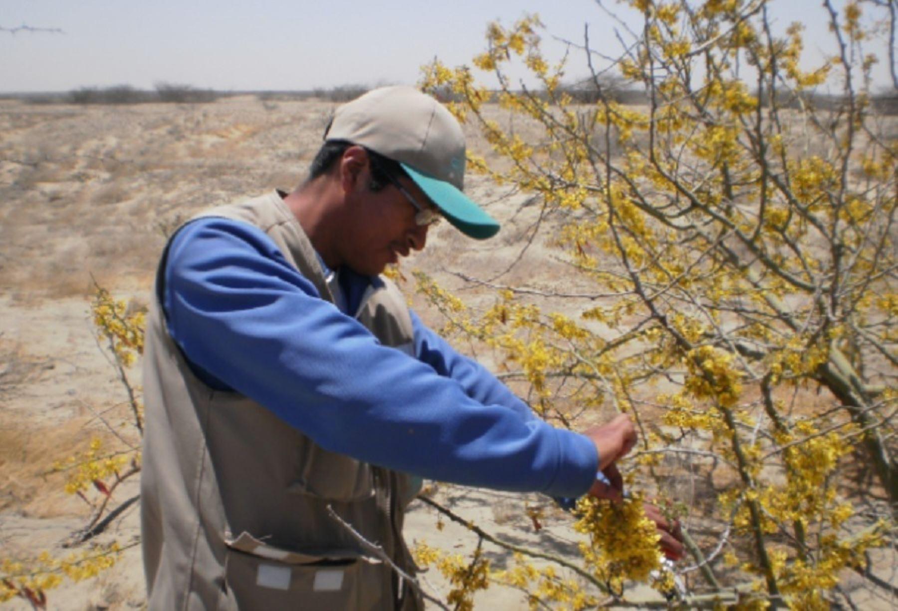 ¡Investigación sin pausa en regiones! Pasco y Junín lideran estudios en flora silvestre