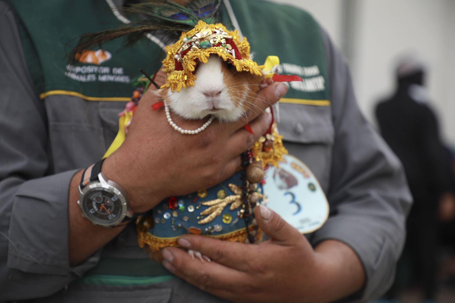 Día Nacional del Cuy: animales menores con trajes típicos de Junín fueron la sensación