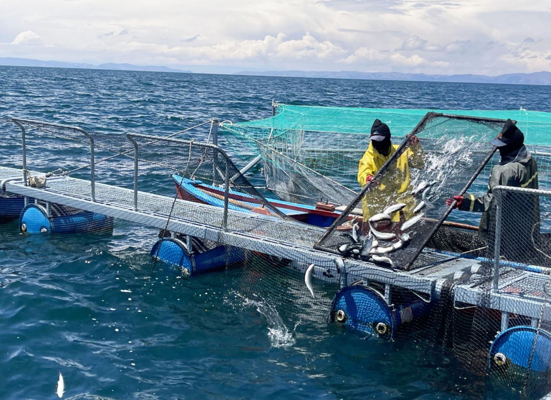 Puno: Sanipes otorgó habilitación sanitaria a 40 centros acuícolas productores de truchas